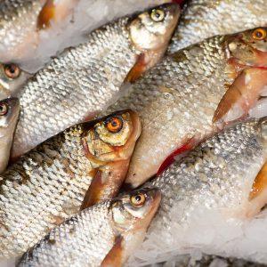 охлажденная свежая рыба в тк долгоозерный