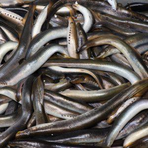 свежая рыба долгоозерный