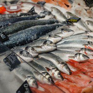 fresh-fish (3)