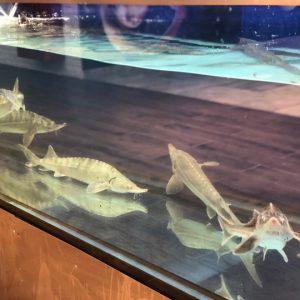 fresh-fish (4)